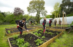 Our students in the veg garden